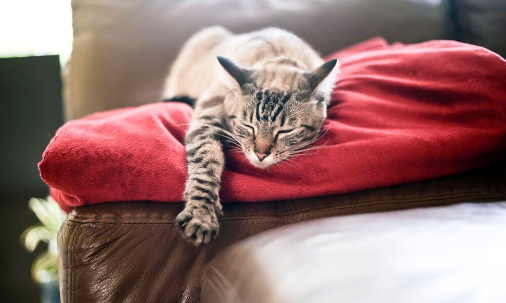 чистка лежанки кошки